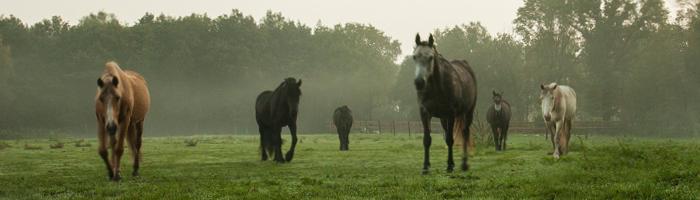 De Paardenboerderij - Paardentraining