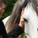 De Paardenboerderij - Straffe Madammen