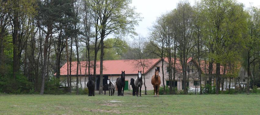De Paardenboerderij - welkomstcomite