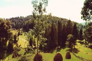 De Paardenboerderij - Cursus Natuurwezens (h)erkennen